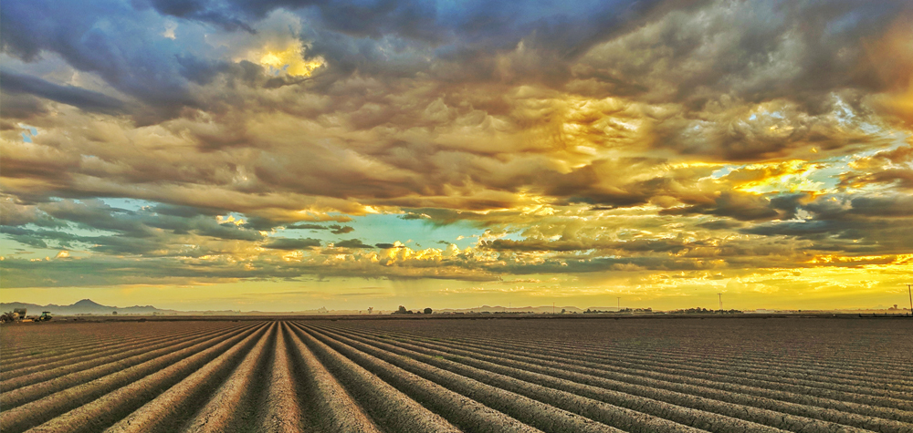 landscape view of crops at sunset or sunrise