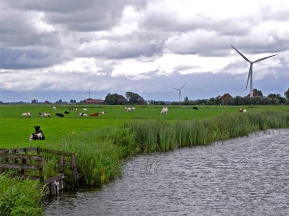 view of the Netherlands, cows, windmills